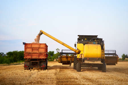 Overloading grain from the combine harvesters into a grain truck in the field. Harvester unloder pouring just harvested wheat into grain box body. Farmers at work. Agriculture harvesting season theme. Фото со стока