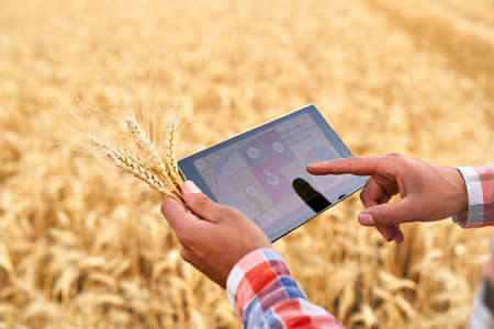 Precision farming. Farmer hands hold tablet using online data management software with maps at wheat field. Agronomist working with touch computer screen to control and analyse agriculture business. 版權商用圖片