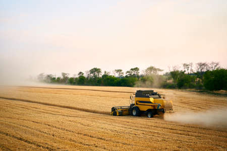 Combine harvesters working in a wheat field on sunset round about. Harvesting machine driver cutting crop in a farmland in the dusk. Organic farming. Agriculture theme, harvesting season. 版權商用圖片