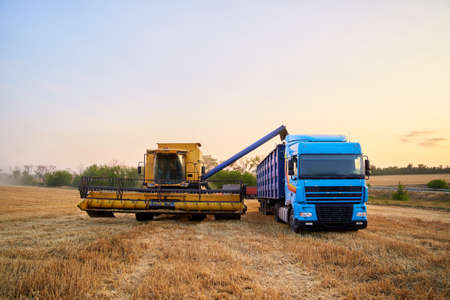 Overloading grain from the combine harvesters into a grain truck in the field. Harvester unloder pouring just harvested wheat into grain box body. Farmers at work. Agriculture harvesting season theme. 版權商用圖片