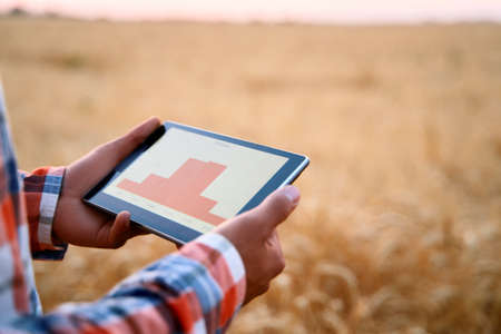 Precision farming. Farmer hands hold tablet using online data management software with charts at wheat field. Agronomist working with touch computer screen to control and analyse agriculture business.
