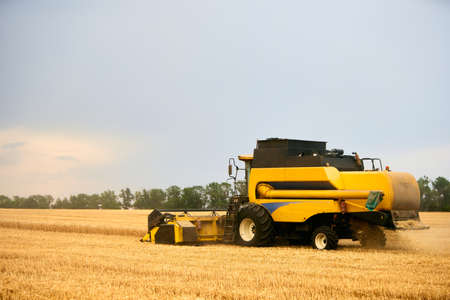 Combine harvester working in wheat field with cloudy moody sky. Harvesting machine driver cutting crop in a farmland. Agriculture theme, harvesting season. 版權商用圖片