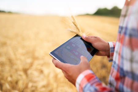 Precision farming. Farmer hands hold tablet using online data management software with maps at wheat field. Agronomist working with touch computer screen to control and analyse agriculture business. Banque d'images
