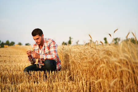 Agronomist examining cereal crop before harvesting sitting in golden field. Smiling farmer holding a bunch of ripe cultivated wheat ears in hands. Rancher in stubble. Organic farming concept.