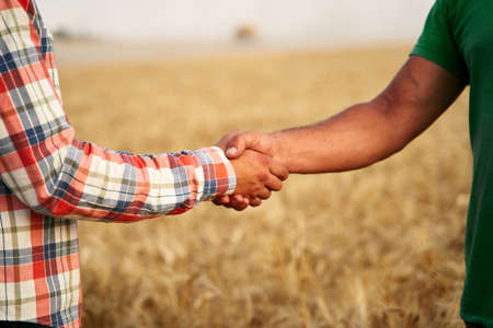 Farmer and agronomist shaking hands standing in a wheat field after agreement. Agriculture business contract concept. Combine harvester driver and rancher negotiate on harvesting season. Handshake