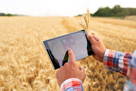 Precision farming. Farmer hands hold tablet using online data management software with maps at wheat field. Agronomist working with touch computer screen to control and analyse agriculture business.