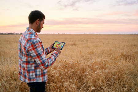 Precision farming. Farmer holds tablet using online data management software with maps, charts at wheat field. Agronomist working with touch computer screen to control and analyse agriculture business 版權商用圖片