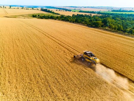 Aerial drone view: combine harvesters working in wheat field on sunset. Harvesting machine driver cutting crop in farmland. Organic farming. Agriculture theme, harvesting season. Quadcopter photo.