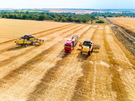 Aerial drone view. Overloading grain from combine harvesters into grain truck in field. Harvester unloder pouring harvested wheat into a box body. Farmers at work. Agriculture harvesting season.