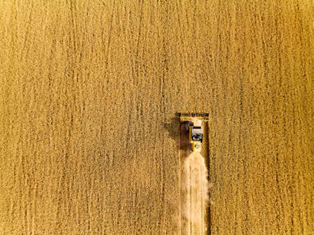 Aerial drone top view from above: combine harvesters working in wheat field. Harvesting machine driver cutting crop in farmland. Organic farming. Agriculture theme, harvesting season. Quadcopter shot.