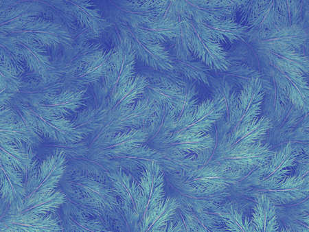 Blue green branches of a fur-tree, spruce or pine with copyspace.