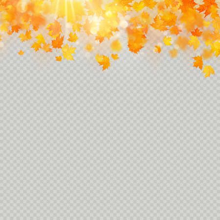 Fall maple leaves with delicate sun for decoration. Autumn leaves border template. Design element. EPS 10 vector file