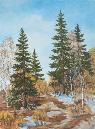 Spring landscape pine and birches trees. Original oil painting.