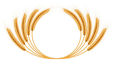 Bunch of wheat ears, dried whole grains realistic illustration frame isolated on white background. Bakery object template. Wheat ears wreath. EPS 10 vector file included Illustration