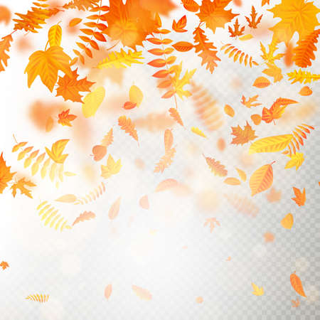 Effect of autumn falling leaves layer with shallow DOF blur. Autumnal foliage fall template. Warm color.