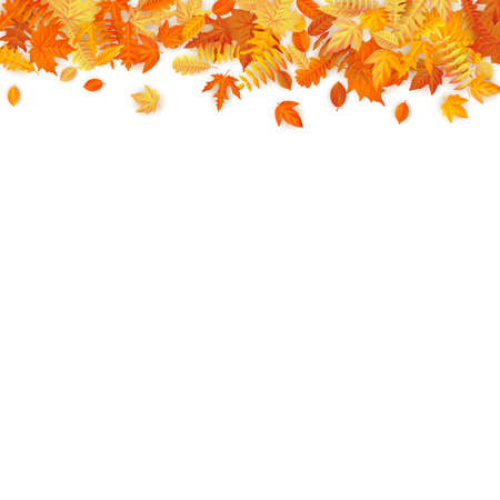 Autumn template with golden maple and oak leaves.