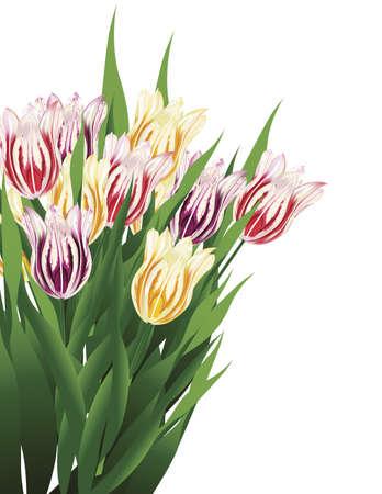 白い背景に分離されたチューリップの花束のイラスト