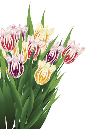 illustration of a tulip bouquet isolated on a white background
