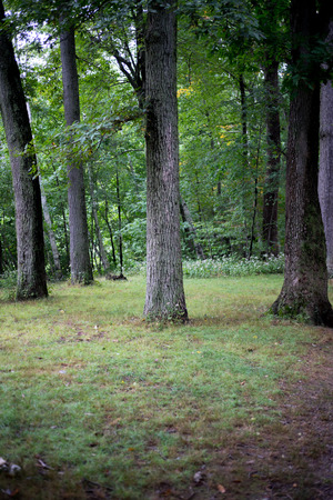 Plain realistic forest shot for background environment Stock Photo