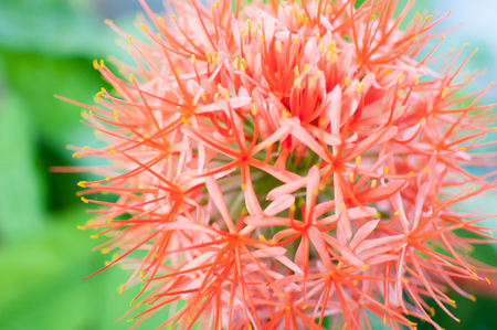 Orange salmon colored flower in africa bright colorful Stock Photo