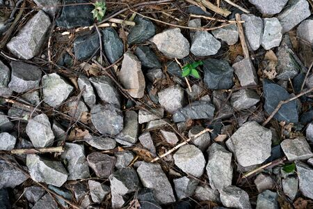 Bed of rocks im forest with sprout of plants poking through Stock Photo