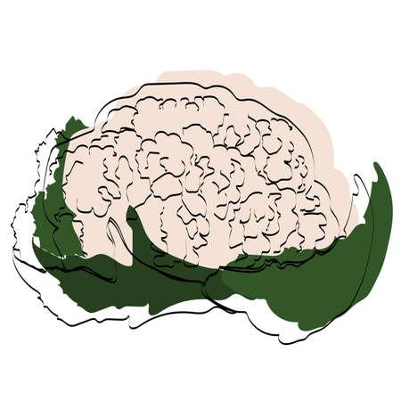 Silhouette of a vegetable. Cauliflower. Vector illustration.