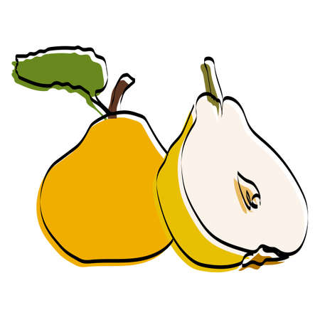 Silhouette of the fetus. Pear Vector illustration.