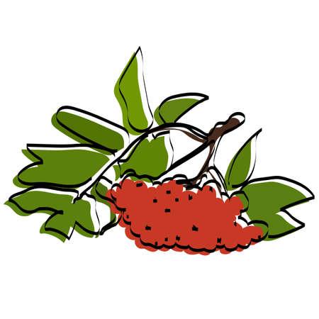 Silhouette of berries. Rowan. Vector illustration. Ilustração