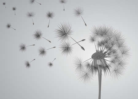 dandelion on grey background. Flying spores. Concept of wishing, tenderness and summer time.