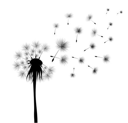 black dandelion on white background. Flying spores. Concept of wishing, tenderness and summer time.
