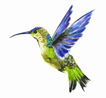 fauna: Isolated watercolor hummingbird on white background. Tropical bird from exotic fauna. Colorful wildlife.