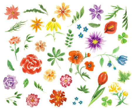 painterly: Watercolor flowers set. Elegant painterly flowers on white background for decoration, celebration and more. Summer flora. Stock Photo