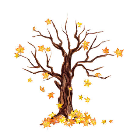 Isolated watercolor dry tree on white background. Fall, autumn, spring nature. Fine tree. Yellow leaves falling. Stock Photo