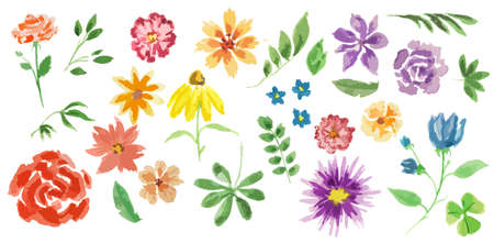 Watercolor flowers set. Elegant painterly flowers on white background for decoration, celebration and more. Summer flora. Illustration