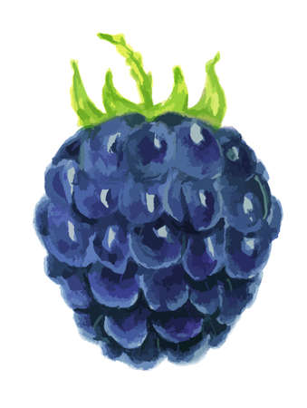sugary: Isolated watercolor blackberry on white background. Fresh, sugary and healthy berry with vitamins. Colorful watercolor art.