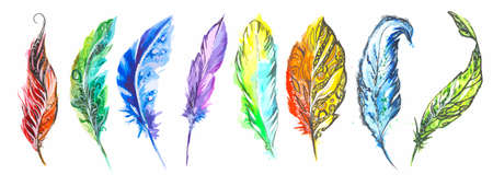 bird feathers: Watercolor colorful feathers set on white background. Birds feathers for boho style and decoration.
