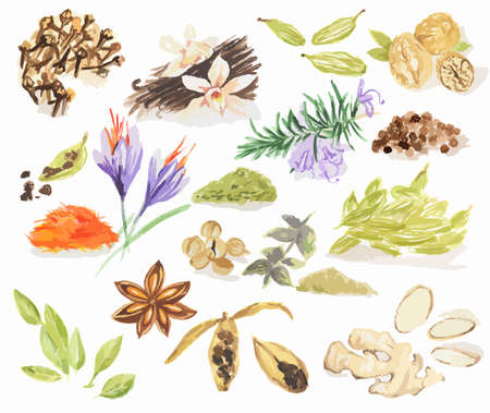 anise: Watercolor spices set. All types of spices as cinnamon, anise, nutmeg, vanilla and more.