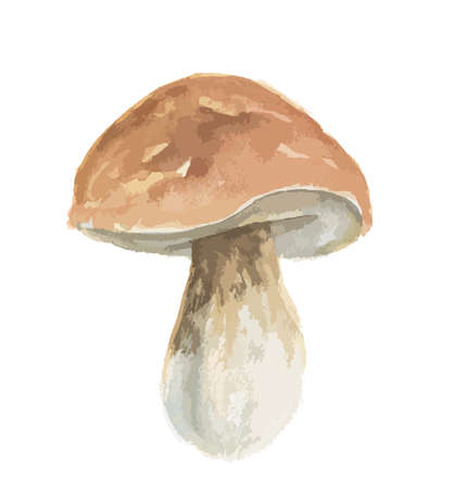 Isolated watercolor porcini. Mushroom on white background. Autumn and fall meal.