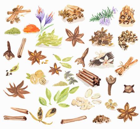 Watercolor specerijen te stellen. Alle soorten van specerijen als kaneel, anijs, nootmuskaat, vanille en nog veel meer. Brown art.