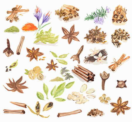 nutmeg: Watercolor spices set. All types of spices as cinnamon, anise, nutmeg, vanilla and more. Brown art.