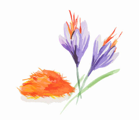 Watercolor saffron flowers. Isolated spice on white background. Indian seasoning for meal or dessert. Illustration
