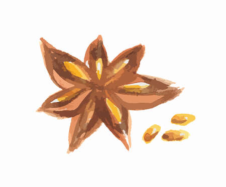 star anise: Watercolor star anise. Isolated spice on white background. Seasoning for meal or dessert.