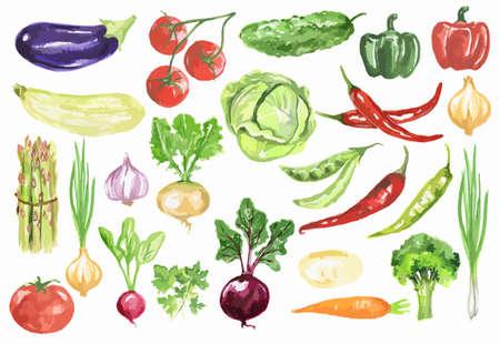 수채화 야채 세트. 흰색 배경에 신선 하 고 건강 한 야채입니다. 비타민의 위대한 소스.