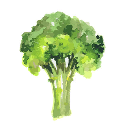 Isolated watercolor broccoli on white background. Healthy and tasty vegetable with vitamins.