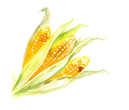 Acquarello giallo mais su sfondo bianco. Grano fresco e dolce con foglie. Uno stile di vita sano. Autunno e raccolta di caduta.