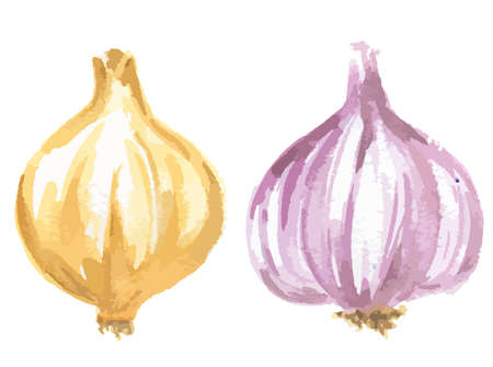 closeup: Watercolor green and red onions on white background. Healthy organic vegetable with vitamins.