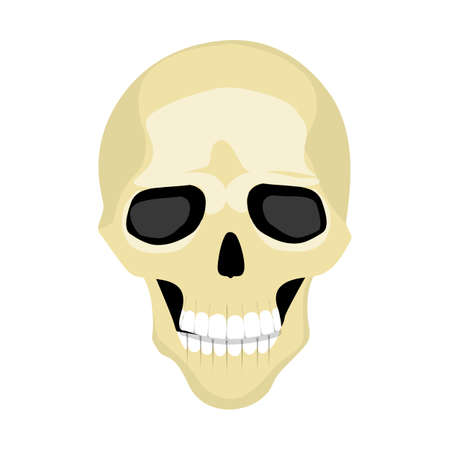 mort: Cartoon isolated human skull on white background. Human skeletone. Symbol of death, pirates and warning.