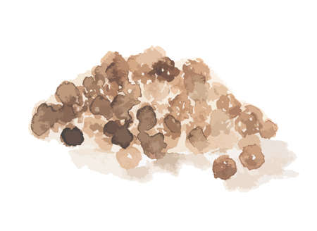 Watercolor black pepper on white background. Food seasoning and aromatherapy. Thai aromatic herb.