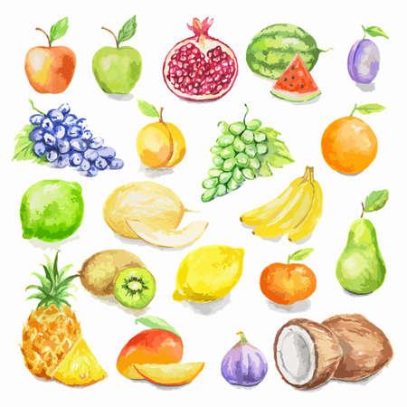 수채화 과일을 설정합니다. 사과, 망고, 자두, 코코넛, 라임 등을 포함 흰색 배경에 수분이 화려한 열대 과일. 비타민 채식 다이어트 음식.