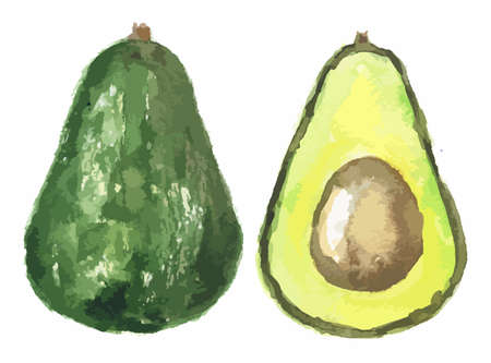 Watercolor halved avocado. Fresh and healthy fruit with vitamins and soft texture. Natural vegan food.